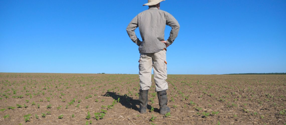 Young,Disappointed,Farmer,Looking,At,Small,Sprouts,Of,Sunflower,On